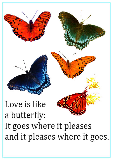 cute love sayings butterflies and text