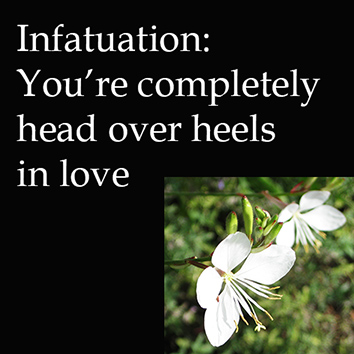 stages of relationships infatuation